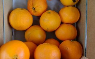 Naranja, pera y mandarina fueron los productos de mayores brechas de precios entre productor y consumidor.