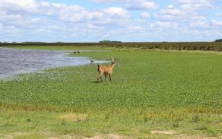 El Parque Nacional Ciervo de los Pantanos tendrá más 5.500 hectáreas.