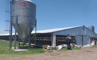 Cañuelas: Policía Federal allanó avícola y rescatan a obreros indocumentados (Infocañuelas)