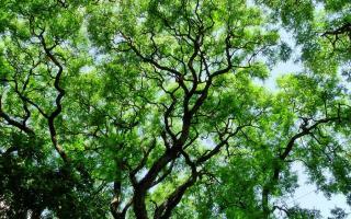 Desde el 2012 organizan plantaciones, adopciones y donaciones masivas de árboles nativos.