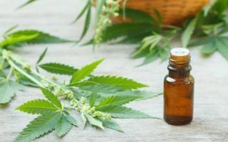 General La Madrid: Autorizan al Ejecutivo a avanzar en la plantación de cannabispara uso medicinal