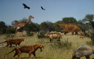 Recuperan gran variedad de fósiles en una sola exploración en Miramar (Ilustración)
