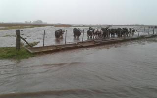 Crece la preocupación por las inundaciones en la Provincia.