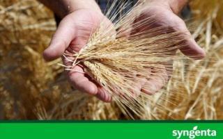 La VII Jornada Técnica sobre Cultivo de Cebada estuvo organizada por Syngenta y Maltería Quilmes en Tres Arroyos