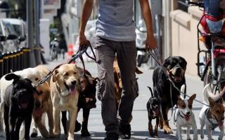 Los paseadores de perros se autorizaron solo en Tigre
