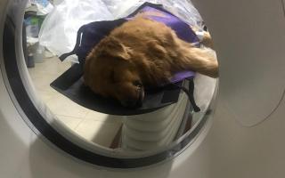 Polémica en Coronel Suárez por tomografía para un perro en el hospital local