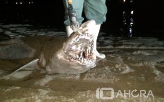 Brutal matanza de tiburones en Mar del Plata. Foto: 10Ahora