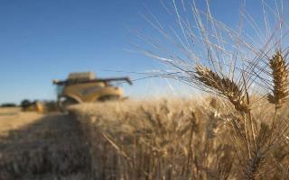 Destacaron el incremento del trigo en la Provincia. Foto: Prensa