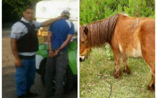El detenido tuvo sexo con una pony en rehabilitación.