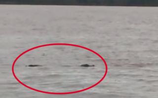Pescadores avistaron un yacaré en la zona portuaria de Ramallo