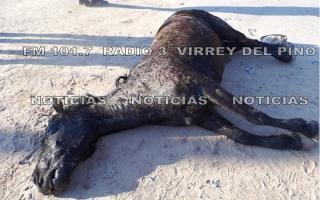 La yegua murió de los golpes propinados por su dueño. Foto: Radio3