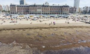 Vista aérea de la playa invadida por algas.