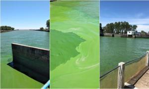 Ante inusual presencia de algas, suspenden envío de agua desde una Planta