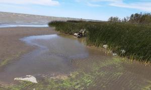 """Alerta por el """"agua verde"""" en Río de la Plata: Llegó a Ensenada y Quilmes"""