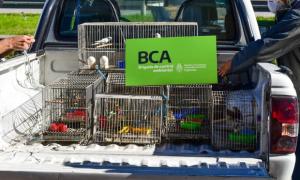 González Catán: Rescatan 68 aves víctimas del tráfico de fauna
