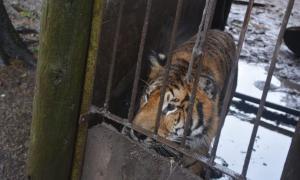 Balcarce: Allanaron un campo por tráfico de fauna silvestre y hallaron más de 300 animales