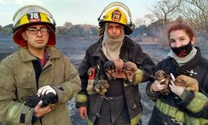 Los tres bomberos con los cachorros
