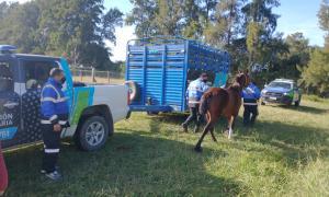 Seis caballos fueron rescatados