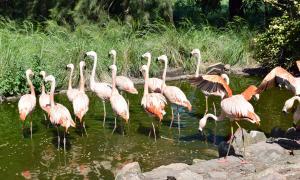 """Olavarría: Desbaratan """"zoológico"""" privado en Olavarría con variedad de animales silvestres"""