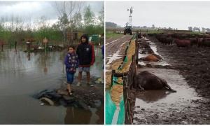 Las lluvias dejaron inundaciones en la Provincia.