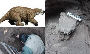 Luján: Más detalles del hallazgo paleontológico de un hueso de un perezoso