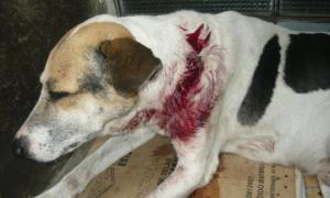 Maltrato animal podría incluirse como materia.