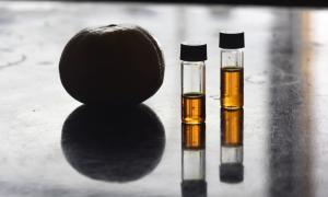 Científicos de la UNLP señalan a la mandarina como una aliada contra el colesterol