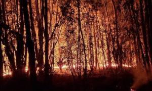 Incendio en el Parque Pereyra Iraola: Piden que se investigue el origen de las llamas