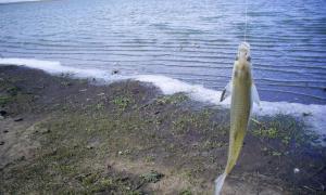 Veda de pesca de pejerrey en la Provincia de Buenos Aires: En qué distritos