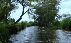 """La Cámara de Diputados de la Nación le dio media sanción a creación del Parque Nacional """"Ciervo de los Pantanos"""" que abarca la actual Reserva Natural Otamendi, la Reserva Natural Río Luján y un sector de islas del Delta Campana."""