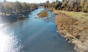 Un estudio reveló que hay niveles alarmantes de glifosato en el río Luján