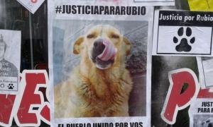 """Los vecinos de Mar del Tuyú piden """"justicia"""" por el perro asesinado"""
