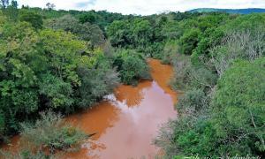 Allianz y fundación Banco de Bosques se unen para salvar la Selva Misionera