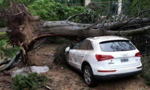 Guardia Urbana y Defensa Civil trabajaron post tormenta