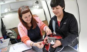 Comenzó a funcionar el Registro de Mascotas de Tigre