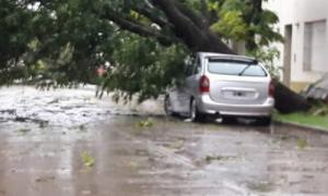 La tormenta causó estragos en Vedia.