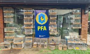 Rescatan aves autóctonas en cautiverio valuadas en casi un millón de pesos (PFA)