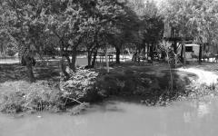 Camalotes en la ribera sin inundación se quedan en la costa, con inundación los lleva la correntada.