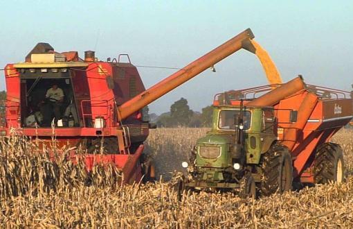 La cosecha de maíz termina con una producción récord.