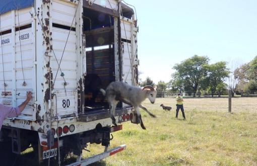 Comenzaron a liberar animales