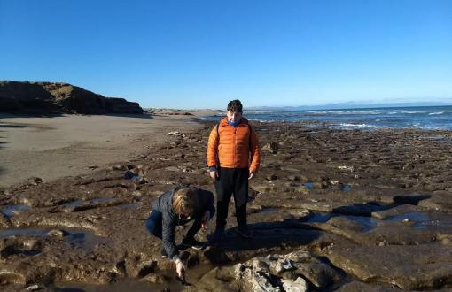 Familia de Miramar encuentra restos fósiles de un perezoso en la costa de Mar del Sud