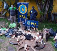 Taxidermia: Decomisaron restos de ciervos, antílopes y elefantes en allanamientos en San Justo y Florencio Varela
