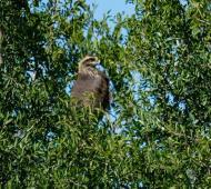 Reserva de Pilar: Liberaron aves que provenían del tráfico de fauna