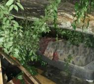 Debajo del árbol llega a verse el colchón de González.