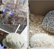 Bahía Blanca: Rescatan ejemplares de animales protegidos y en peligro de extinción