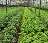 Los productores beneficiados desarrollan su producción en los municipios de Tandil, La Plata, Florencio Varela, San Vicente, Mercedes, Carlos Tejedor, Guaminí, Salliqueló, Puán, Pigüé y Pehuajó.