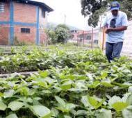 El Programa Nacional de Agricultura Periurbana alcanza a 85 mil pequeños productores de 112 ciudades.
