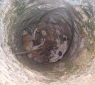 Olavarría: Cruel maltrato a dos galgos que fueron arrojados a un aljibe en desuso