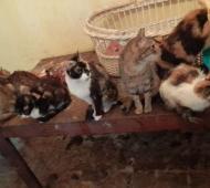 La casa de los gatos en La Plata