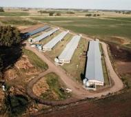 Bolívar: Empresa dedicada a la cría de ganado porcino invierte $100 millones para ampliar su producción con apoyo del BICE